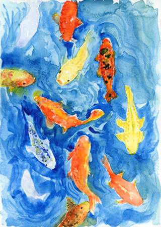 Koi fish in the blue water